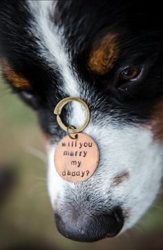 This puppy collar proposal is just the sweetest story ever. Country Proposal Ideas, Cute Proposal Ideas, Romantic Proposal, Proposal Photos, Wedding Events, Our Wedding, Dream Wedding, Wedding Ideas, Weddings