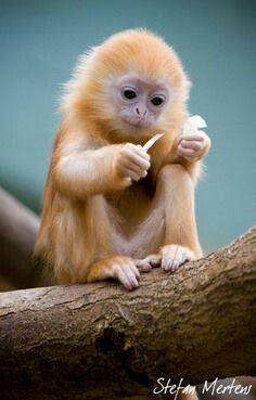 Monkey!! Omgosh!!!! What a flipping cutie!!! SO cute!!!!