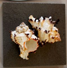 4 tiles with sea shells ~ 2 tan and 2 grey ~ taxonomical collection ~ tiles 4 inches ~ $40.00 ~ icyndi creations