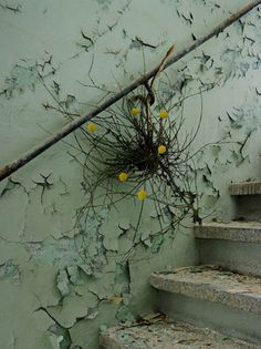 "From ""blumen ohne wasser (Flowers without water)"" series by German photographer Maria Grossmann, in collaboration with Monika Schürle. Nice contrast of nature vs. manmade, life vs. decay..."