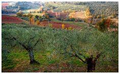 ulivi e sagrantino #umbria