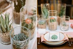 3 Assorted Cactus Plants Have A Margarita by SucculentsGalore