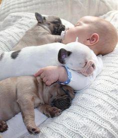 Newborn Male Brindle Frenchie DFW TX Of - Ivette ivens baby bulldog