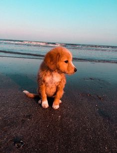 This cute puppy golden retriever will brighten your day. Dogs are incredible friends. Cute Little Animals, Cute Funny Animals, Baby Animals Super Cute, Cute Dogs And Puppies, Doggies, Baby Dogs, Silly Dogs, Cute Creatures, Animals Beautiful
