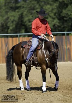 Riding Exercise #7: Yield the Hindquarters on a Straight Line Goal: To be able to walk, trot and canter the horse forward on a straight line and then press with your leg back near his flank to have him move his hindquarters up and over while still maintaining forward motion. At the same time, the horse should keep his nose softened to the inside. Learn more https://www.downunderhorsemanship.com/Store/Product/MEDIA/D/254/