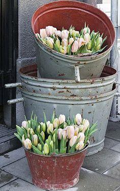 Galvanized buckets and tulips