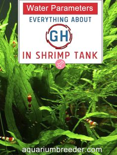 Water Parameters: Everything about GH in Shrimp Tank  Aquarium, Dwarf shrimp, freshwater crabs, crayfish, fish, snails, care, maintenance, problems, treatment, measure, test kit.
