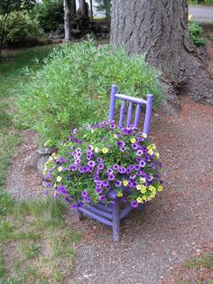Re purposed chair, painted purple, with flowers adds a bright spot in our garden.