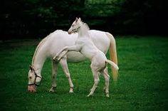 Resultado de imagem para cavalo branco