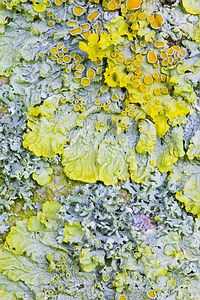 Lichen-I like the colder colours being white and pale blue which then contrast with the warmer colours being the oranges. I could create this by ruffling up tissue paper which would look frilly a like the lichen.