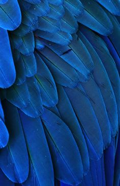 Michaelfitzsimmons:Macaw Feathers V. Photo By Michael.Different shades of blue if you want to use the eye dropper. Bleu Turquoise, Cobalt Blue, Cerulean, Love Blue, Blue And White, Color Blue, Azul Indigo, Indigo Blue, Fotografia Macro