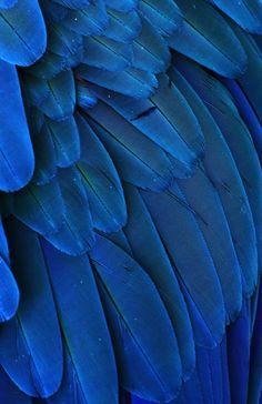 tropical bird - Pesquisa Google