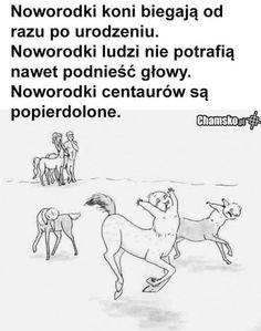 Very Funny Memes, Wtf Funny, Funny Cute, Camp Hero, Funny Images, Funny Pictures, Hahaha Hahaha, Polish Memes, Funny Mems