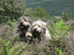 - Dogs, Animals, Dog Breeds, Pet Dogs, Animales, Animaux, Doggies, Animal, Dog