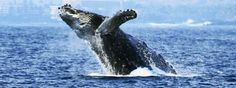 Whale Watch Cruise (Seasonal)