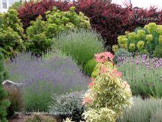 MySecretGarden: A Year Round Beauty: Euphorbia
