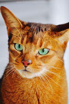 red cat cutie