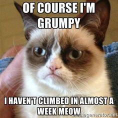 grumpy cat hasn't climbed