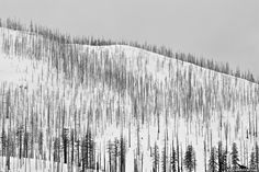 Photo of the Day: Frozen Forest