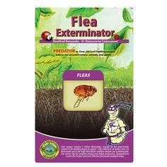 Nematodes (Steinernema Carpocapsae) for Flea & Tick Control