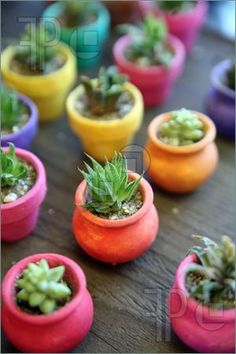 Image of Miniature Cactus in colorful planters, Old Town, San Diego, California