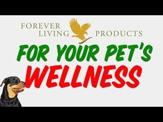Aloe Vera Based Products for Animals by Forever Living Products - YouTube