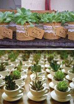 Succulent Souvenirs Plants 49 Ideas For 2019 Succulent Wedding Favors, Succulent Gifts, Wedding Favours, Wedding Gifts, Cacti And Succulents, Planting Succulents, Deco Champetre, Flower Pots, Flowers