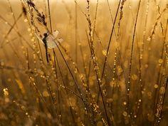 Photograph Bubbles by Erik Veldkamp on 500px