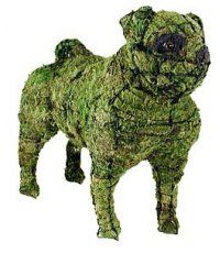 A chia pug!!    Pug Mossed Topiary Frame