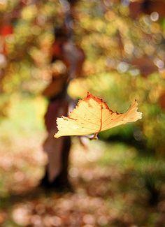 Freedom...  #Fall, #Autumn, #Leaf, #Outdoors, #Garden #My Fall Edit #Victoria's Secret #VS