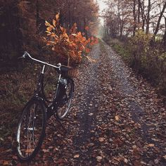 fall trail rides