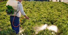 Reguli obligatorii la aplicarea de tratamente chimice la plante | Paradis Verde