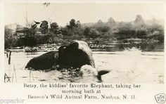 Real Photo of The Elephant Bathing at Benson's Wild Animal Farm in Hudson NH | eBay