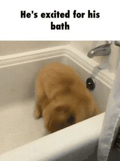 He's excited for his bath  GIF