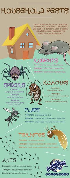 Household Pests [Infographic]