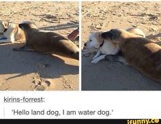 tumblr, dog, land, water  Land dog, I am water dog. Let us be friends.