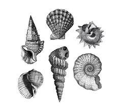 Hey, diesen tollen Etsy-Artikel fand ich bei https://www.etsy.com/de/listing/232847563/vintage-shells-temporary-tattoos-she