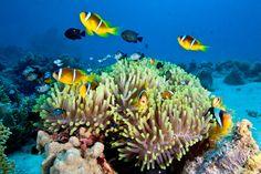 Faire de la plongée dans la Grande barrière de corail dans le Queensland en Australie. | 41 aventures à ajouter à votre liste de choses à faire avant de mourir