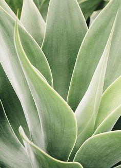 Succulent ~ Photography by Janaina Lambert