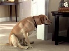 Funny Dog Commercial - For more funny dog videos, visit: - Silly Dogs, Funny Dogs, Funny Animals, Cute Animals, Funny Dog Videos, Funny Dog Pictures, Dog Smells, Funny Commercials, Dog Shaming