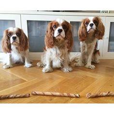 Lexie, Allan and Hugo ♥