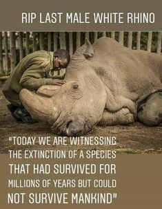 The last male northern white rhino has left the earth. We need to protect endangered species before they disappear. Beautiful Creatures, Animals Beautiful, Animals And Pets, Cute Animals, Wild Animals, Large Animals, Amor Animal, Stop Animal Cruelty, Endangered Species
