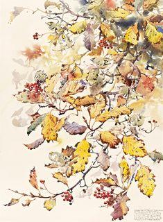 Goldcrest, Darren Woodhead