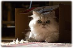 Happy Boxing Day!!! – 30 funny pics of cats sitting in boxes | 4Birds.net