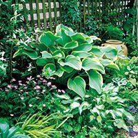 Some of the Most Common Landscape Design Features Shade Perennials, Shade Plants, Green Garden, Shade Garden, Landscape Design, Garden Design, Small Garden Plans, Outside Plants, Natural Garden