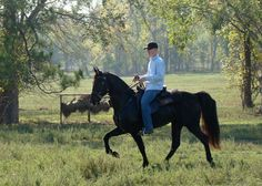 Tennessee Walking Horse - the correct NATURAL way - such beautiful animals, and SO SO comfy! If my back ever gets to the point where it hurts to ride - I'm getting one of these from this breeder for sure.