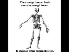 An Astounding Medical Science Fact About The Human Body That Will Still Baffle At Least Of The Population. Funny Skeleton, Human Skeleton, Science Jokes, Science Facts, Medical Science, Fun Facts, Biology Memes, Medical Memes, Medical Humour