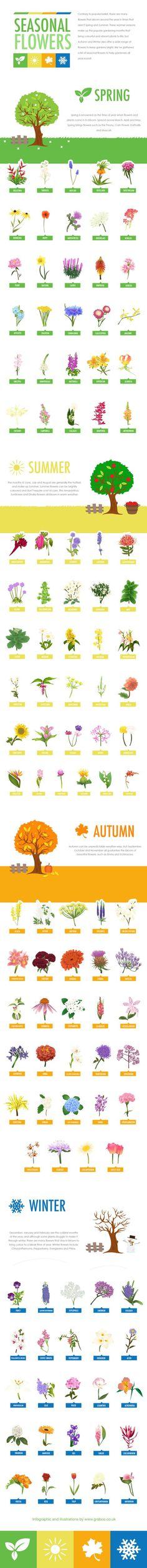 Seasonal Flowers [Hand Drawn Infographic] | ecogreenlove