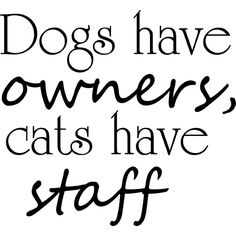 """Dogs Have Owners, Cats Have Staff Vinyl Wall Decal 22"""" x 20"""" $13.99 Vinyl Wall Decals, Cats, Animals, Gatos, Animales, Animaux, Animal, Cat, Animais"""