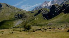 I pascoli #valledaosta #mountain